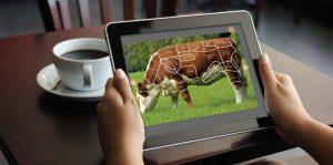 ABP Livestock app
