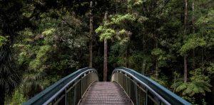 Finding Creative Inspiration - Nature Walking
