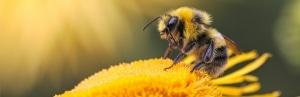 Kilkenny County Council Pollinator Plan
